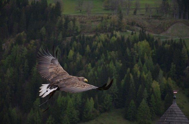 מופע העופות הדורסים